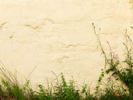 pic of blue-bell  - Blue bells and green grass on textured whitewashed wall of a building - JPG