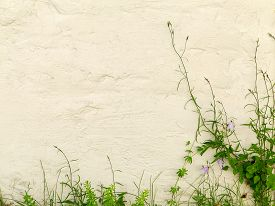 stock photo of blue-bell  - Blue bells and green grass on textured whitewashed wall of a building - JPG