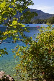 pic of pedal  - view through branches to lake eibsee pedal boats on cyan colored water bavaria - JPG