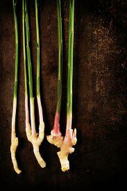 picture of zingiber  - Fresh harvested ginger  - JPG