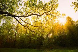 stock photo of canopy  - Sunlight Through Green Tree Crown  - JPG