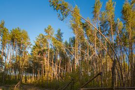 image of hurricane wind  - Fallen Trees In Coniferous Forest After Strong Hurricane Wind - JPG