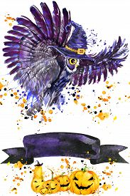 pic of owls  - Halloween owl and witch hat - JPG