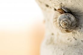 pic of hermaphrodite  - Macro of snail sleeping on a rock with space for text (horizontal version)