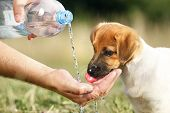 A Puppy Drinking Water From A Bottle