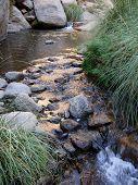 Gushing Mountain Stream