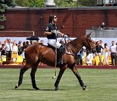 NEW YORK - MAY 30: Argentine polo player Nachos Figueras competes in the Veuve Clicquot Manhattan Po