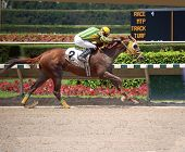 picture of blinders  - Post position two horse finishing first at a race track in south florida - JPG