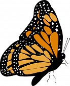 monarch butterfly l(side view) vector