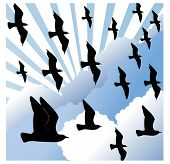 picture of caw  - flocking birds with cloudburst - JPG