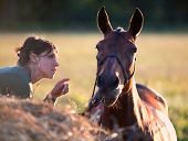 Dialoge of young girl and bay horse in sunset