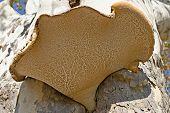 Underside of Fungus