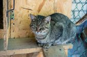 A Simple Domestic Cat Sits In A Cage. poster
