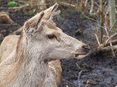 Female Red Deer Landscape