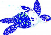 picture of terrapin turtle  - Vector clip - JPG