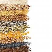 picture of flax plant  - Cereal Grains and Seeds  - JPG