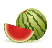illustration  water melon