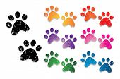 stock photo of bear tracks  - paw print collection - JPG