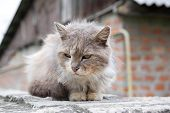Old Homeless Street Cat That Sits On The Fence. A Cat That Is Cold. Street Cats poster