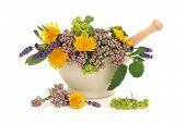 Kruid lavendel, Valeriaan, dames mantel en paardebloem bloemen met Aloë vera, salie en Citroenmelisse lea