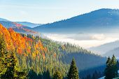 Wonderful Autumn Sunrise In Mountains. Fog Floating In The Distant Valley. Hills With Spruce And Bee poster