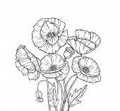 Poppy Bouquet. Line Art Poppies Flower Sketch Drawing Wall Artwork Decorative Plant Poppy Flower Bud poster