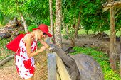 Elegant Caucasian Happy Tourist Woman Feeding A Ancient Male Of Aldabra Giant Tortoise, Aldabrachely poster