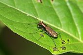 A Coleoptera Insects With Copper Shiny