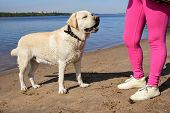 Woman Walking On The Beach With A Dog On A Leash. Rest By Water. Golden Labrador. Family Vacation By poster