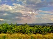 stock photo of bandeiras  - this is a picture of a peaches plantation, in Pinto Bandeira, RS, Brazil.