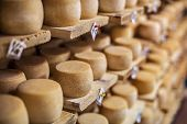 stock photo of basement  - Cow milk cheese - JPG