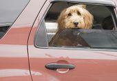 Back-Seat Dog
