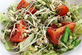 Sprout Salad Closeup