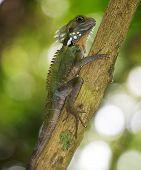 Boy's Forest Dragon