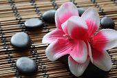 Zen Pebbles And Artificial Flower