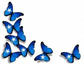 Somalian Flag Butterflies, Isolated On White Background