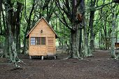 Wooden house in the forest. Tierra del fuego