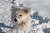 Dog On Snow