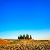 Cypress Group And Field Rural Landscape In Orcia, San Quirico, Tuscany. Italy