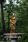 stock photo of samson  - Peterhof royal park golden statue in summer - JPG