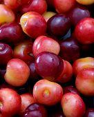 Mixed Cherries