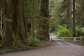 Redwood Road
