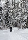 forest snowshoeing
