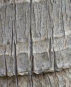 tropical tree bark closeup