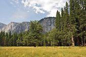 Yosemite Scenery