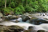 Water cascading over river rocks in Great Smoky Mtn. National Park