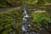 Hoh Rainforest Creek
