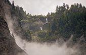 Fog In Forrest