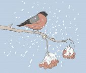 Bullfinch Bird Sitting On Branch In Winter Vector