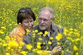 stock photo of yellow flower  - Lovely senior couple enjoying the sun in a green grass field full of buttercups - JPG